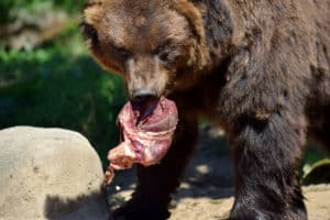 Does Smoking Meat Attract Bears?